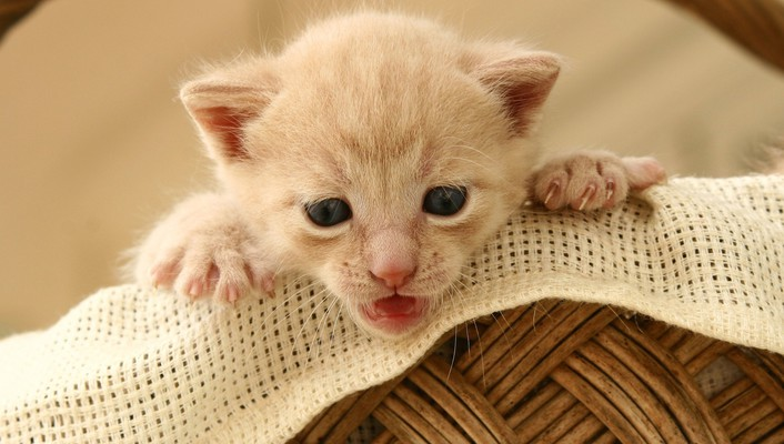 Small cute kitten wallpaper