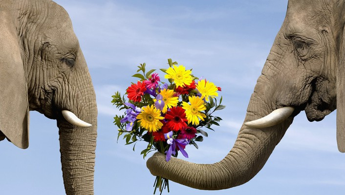 Love flowers animals elephants bouquet wallpaper