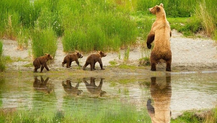 Cute bear family wallpaper
