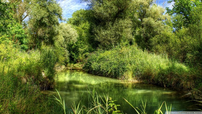 Green forest and river hdr wallpaper