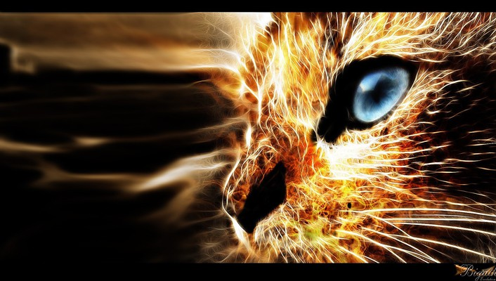 Animals cats digital art feline fire wallpaper