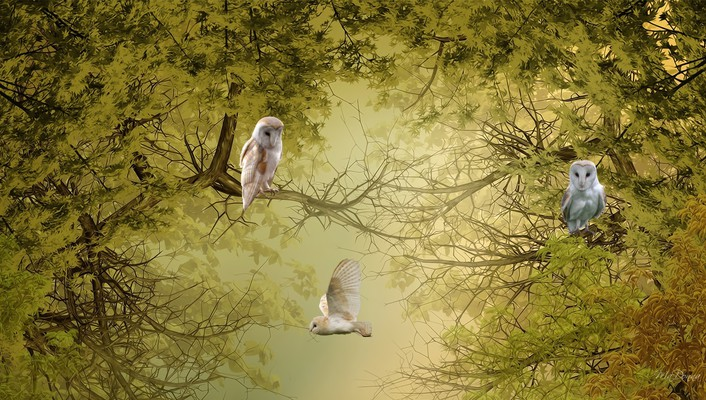 Nature trees birds owls wallpaper