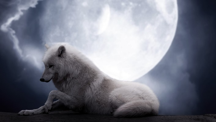 Animals moon in love wolves wallpaper