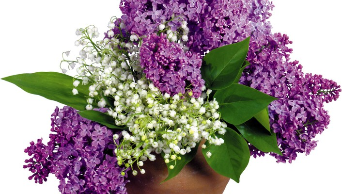 Lilac and white flowers wallpaper