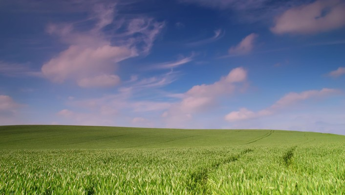 Landscape of grass wallpaper