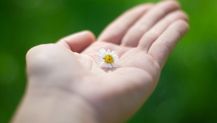 Flower in hand wallpaper