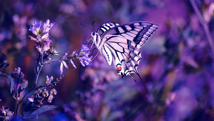 Beautiful butterfly and flowers wallpaper