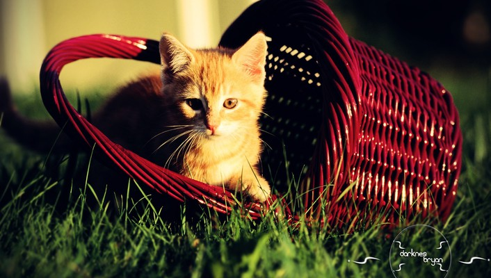 Animals baskets grass nature wallpaper