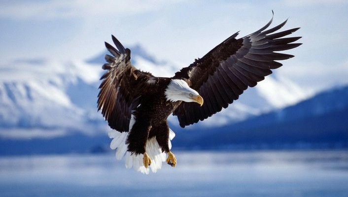 Mountains flying birds eagles blurred background wallpaper
