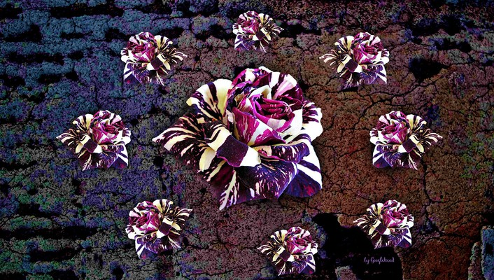 Variegated roses collage wallpaper