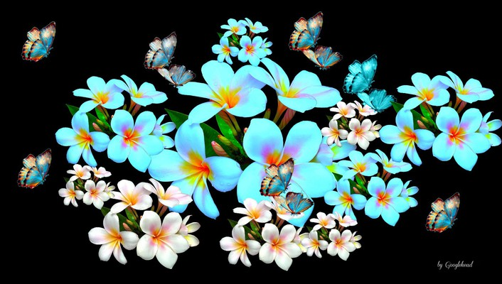 Plumeria and butterflies collage wallpaper