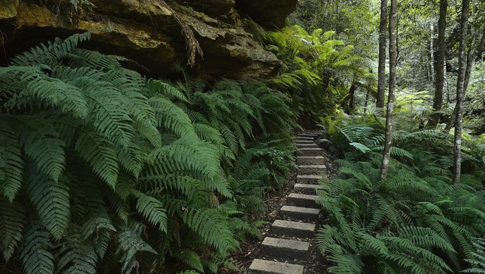 Australia ferns national park new south wales wallpaper