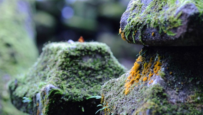 Japan stones moss depth of field wallpaper