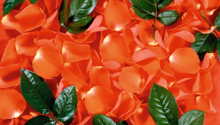 Orange leaves flower petals background wallpaper