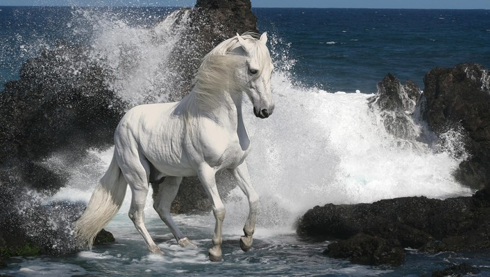 Southern animals horses sea wallpaper