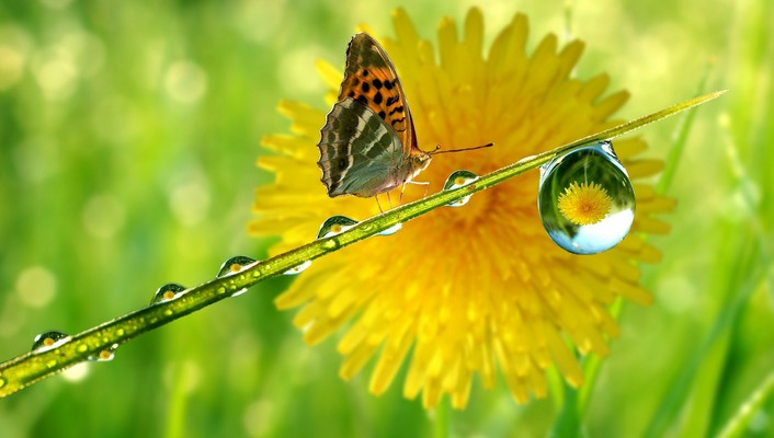 Green nature drop macro sunflowers butterfly wings butterflies wallpaper