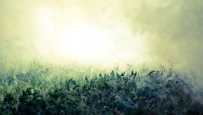Grass fog macro wallpaper