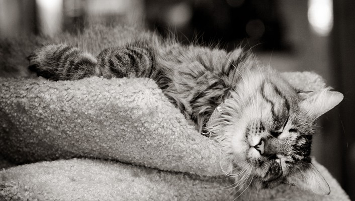 Animals cats kittens monochrome outer space wallpaper