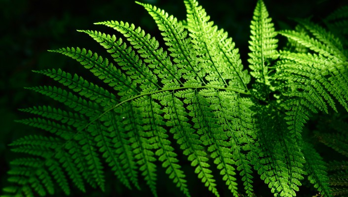 Nature leaves sunlight ferns wallpaper