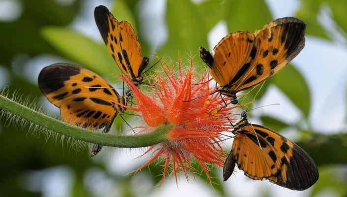 Nature insects orange flowers blurred background butterflies wallpaper