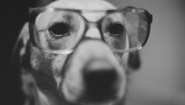 Animals dogs glasses grayscale wallpaper