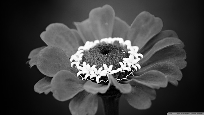 Black and white nature flowers wallpaper