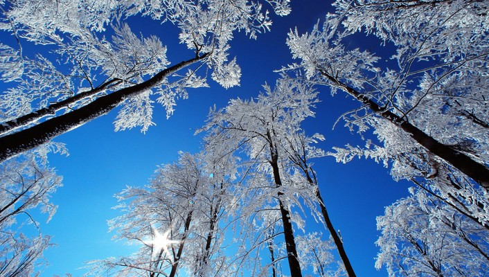 Forests winter wallpaper