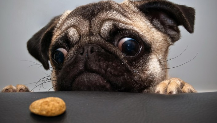 Animals dogs eyes funny wallpaper