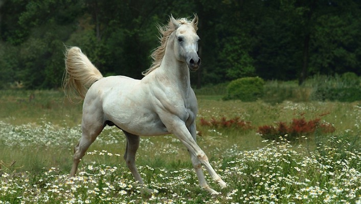 Mare in a meadow wallpaper