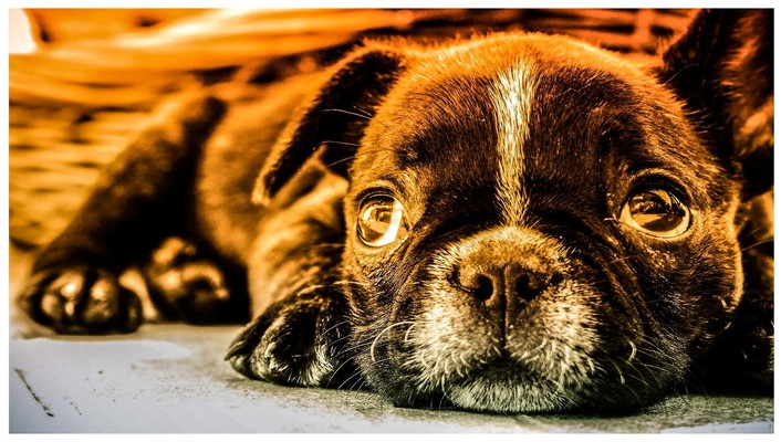Animals dogs dreamer puppies wallpaper