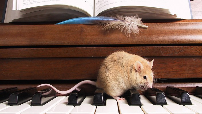 Music piano animals mice wallpaper