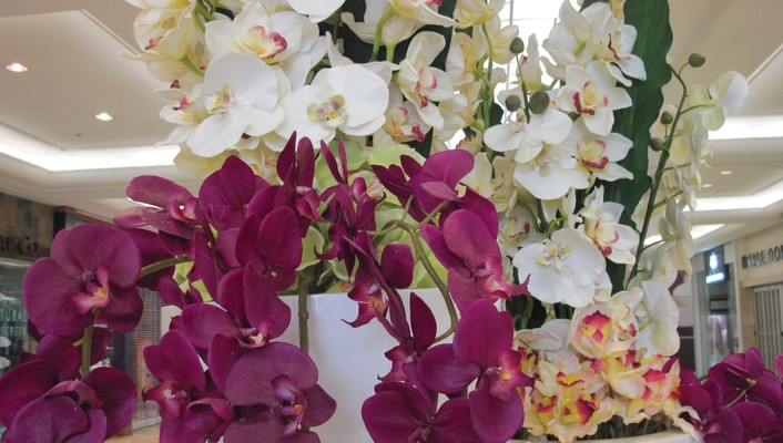 Red orchids wallpaper