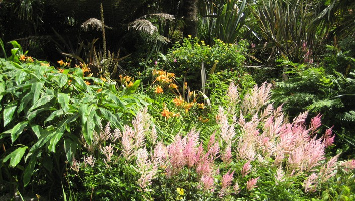 Lillies in tropical gardens trebah cornwall england wallpaper