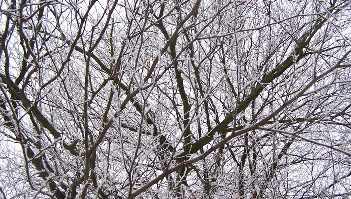 White branches wallpaper