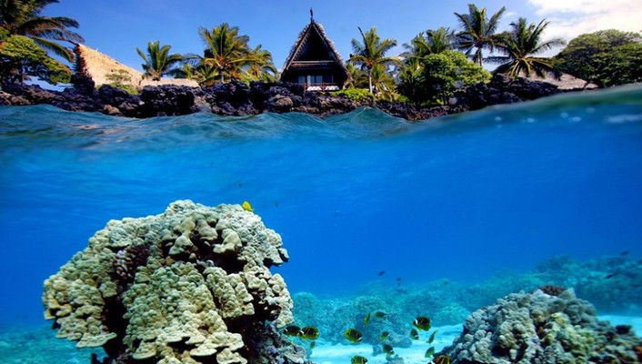 Underwater shot of coral reef and beach hut wallpaper