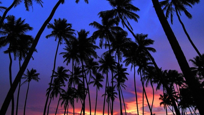 Sri lanka landscapes nature palm trees silhouettes wallpaper