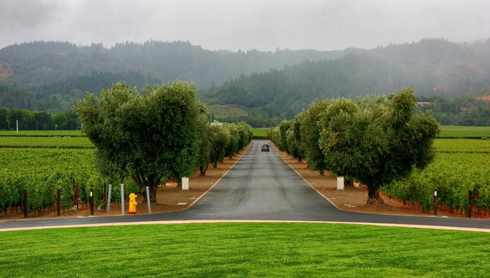 Road through the vineyards wallpaper