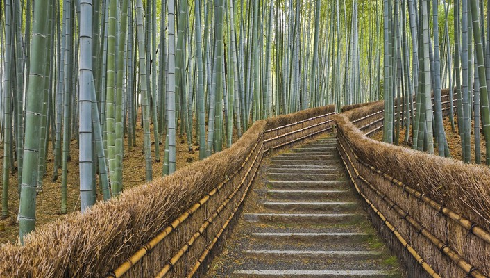 Japan nature bamboo path kyoto temple wallpaper