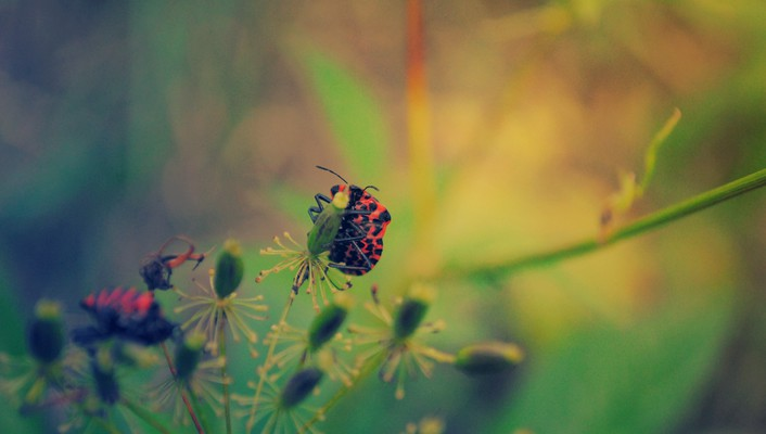 Nature animals plants macro wallpaper