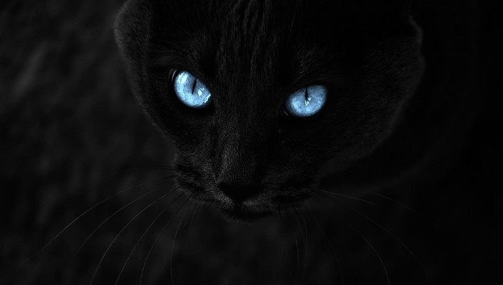 Eyes cats blue wallpaper