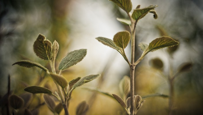 Depth of field leaves macro nature plants wallpaper