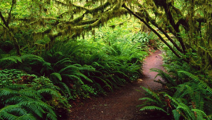 Landscapes rain forest national ferns washington wallpaper