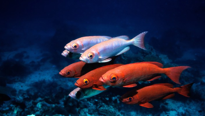 Water fish underwater sea wallpaper