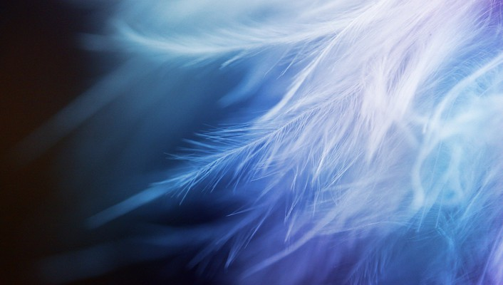 Abstract feathers wallpaper