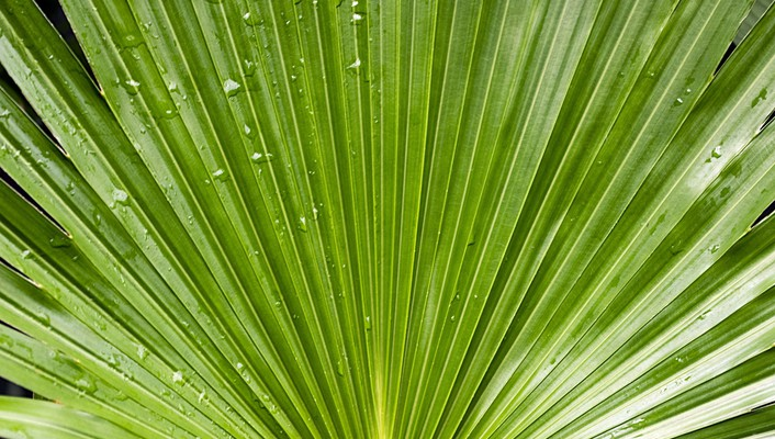 Green water drop plants palm leaves wallpaper