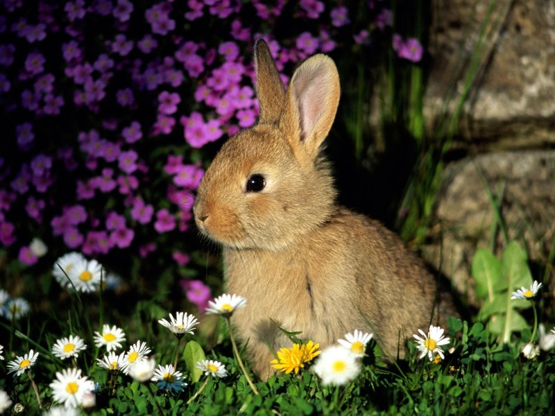 adorable pets: rabbits